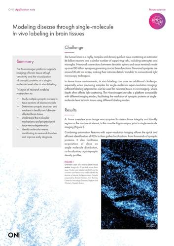 Modeling disease through single-molecule in vivoimaging brain tissues